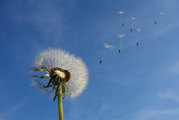 Fleurs de funérailles : accompagner les défunts en poésie